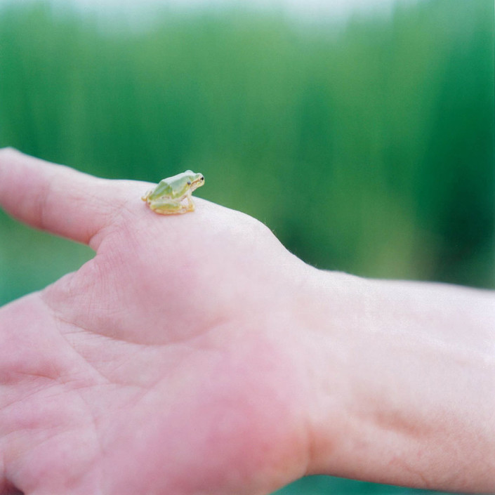 "RINKO KAWAUCHI | Untitled, from the series ""Iluminance"", 2009 