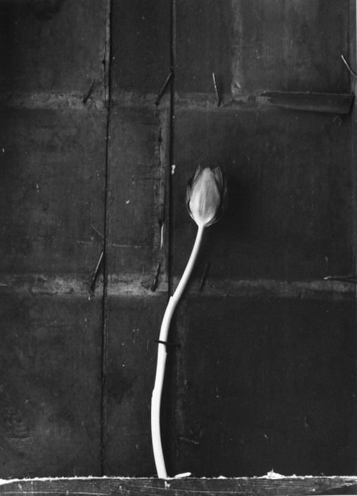 "Alexandra Catiere, Tulip, 2014, from ""Nobody believes that I'm alive"""